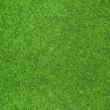 grass FOTOKÚTIK.sk - PHOTOBOOTH.sk