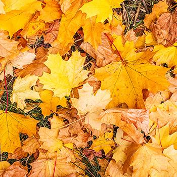 fotokutik fotopozadie autumn FOTOKÚTIK.sk - PHOTOBOOTH.sk
